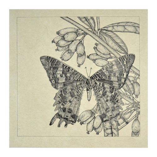 Untitled (butterfly 3) by George Whitman at