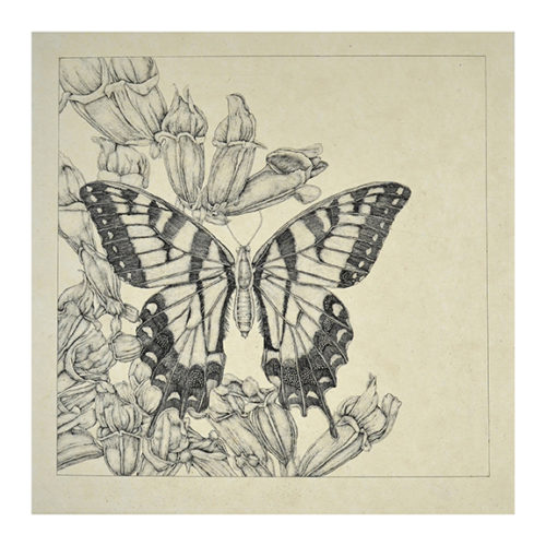 Untitled (butterfly 4) by George Whitman at