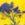 Yellow Sloe by Henrik Simonsen