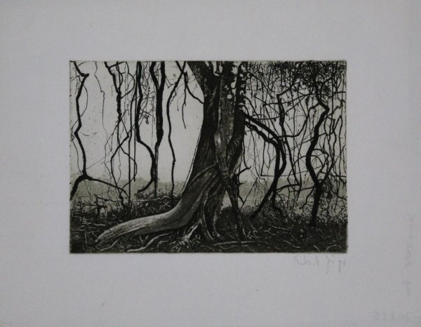 Knorriger Baum / Gnarled Tree by Herbert Jäger
