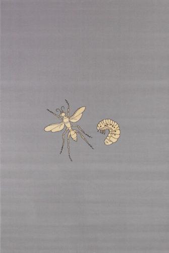 Fly by Jan Fabre
