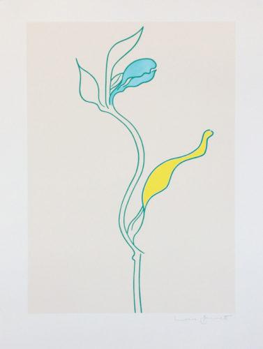 Dandelion by Lucie Bennett