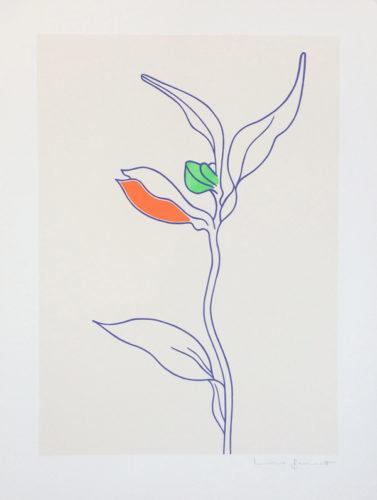Tigerlily by Lucie Bennett