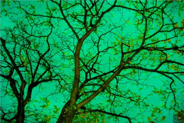 Verde by Margarita Bohórquez