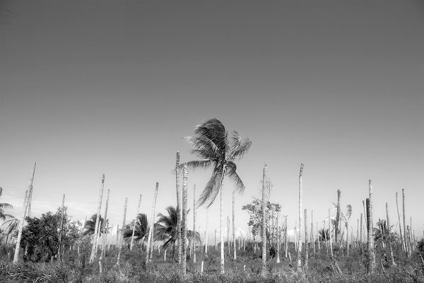 Ex Palms by Martin Brent