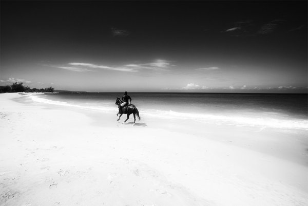 Gallop by Martin Brent