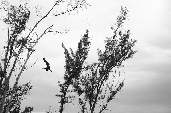 Tree Divers Vi by Martin Brent