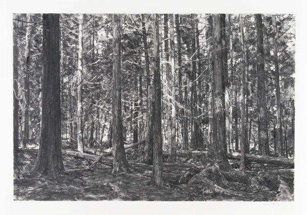 Lopez Island Woods Ii by Michael Kareken at Michael Kareken