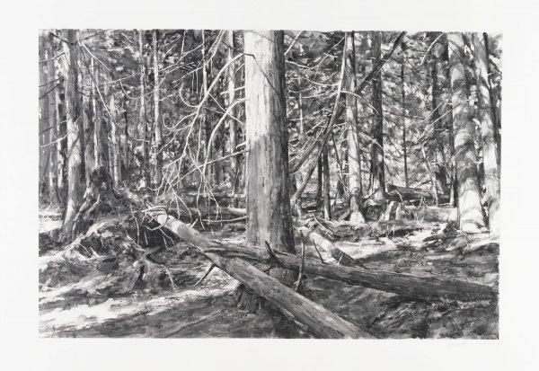 Lopez Islands Woods by Michael Kareken