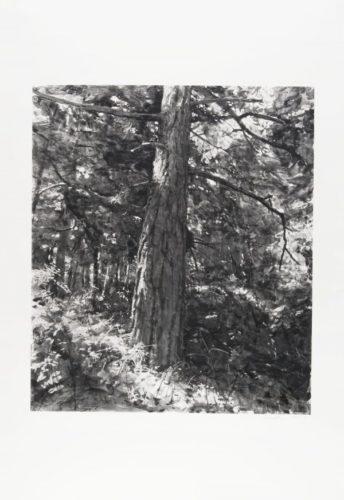 Tree Near Iceberg Point by Michael Kareken at Michael Kareken