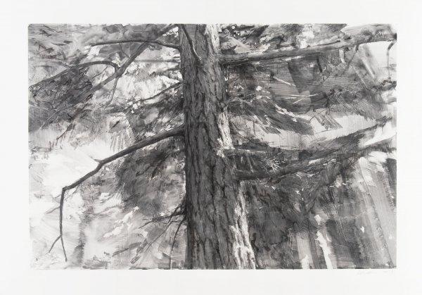 Tree Near Iceberg Point Iii by Michael Kareken at