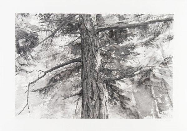 Tree Near Iceberg Point Ii by Michael Kareken at