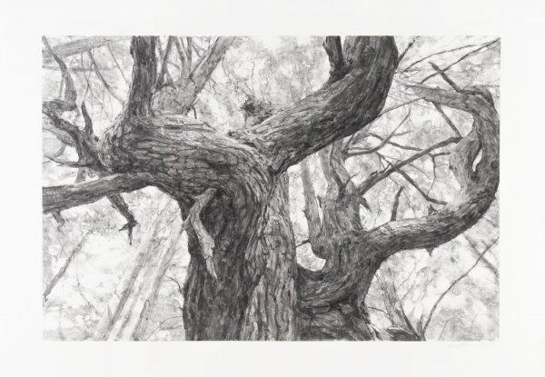 Tree Near Second Beach by Michael Kareken at