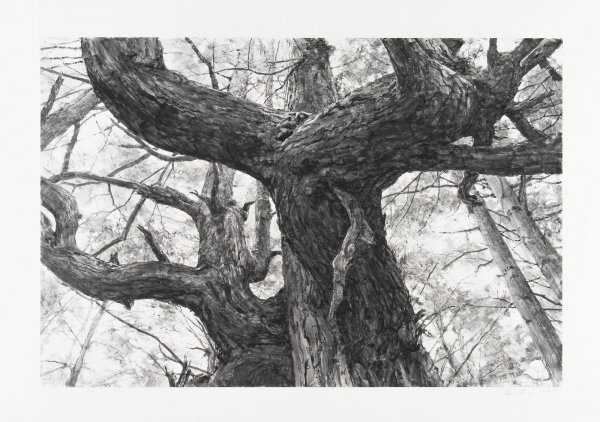 Tree Near Second Beach Ii by Michael Kareken at