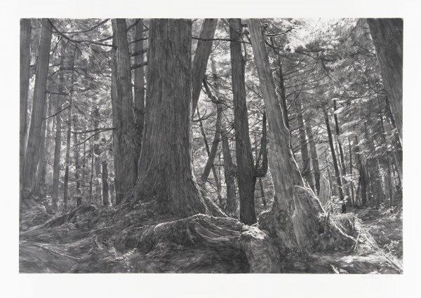 Trees Near Second Beach: Olympic Peninsula by Michael Kareken at Michael Kareken