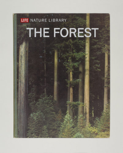 The Forest by Mungo Thomson