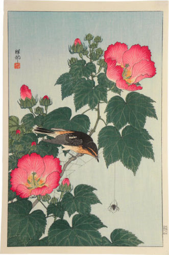 Fly-catcher On Rose Mallow Watching Spider by Ohara Koson (Shoson)