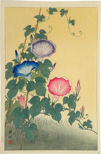 Morning Glory In Full Bloom by Ohara Koson (Shoson)
