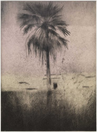 Palmera by Paul Pfeiffer