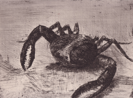 Bestiaire by Pedro Zamorano de Biedma