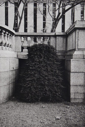 Shrub Ii by Philip Van Keuren at