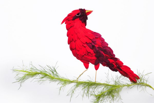 Cardinal by Red Hongyi
