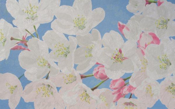 Someiyoshino Cherry Blossoms by Rica Bando
