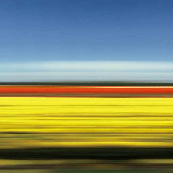 Travelling Still Tulip Fields Holland Xi by Rob Carter