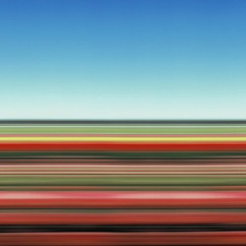 Travelling Still Tulip Fields Holland Xxvii by Rob Carter