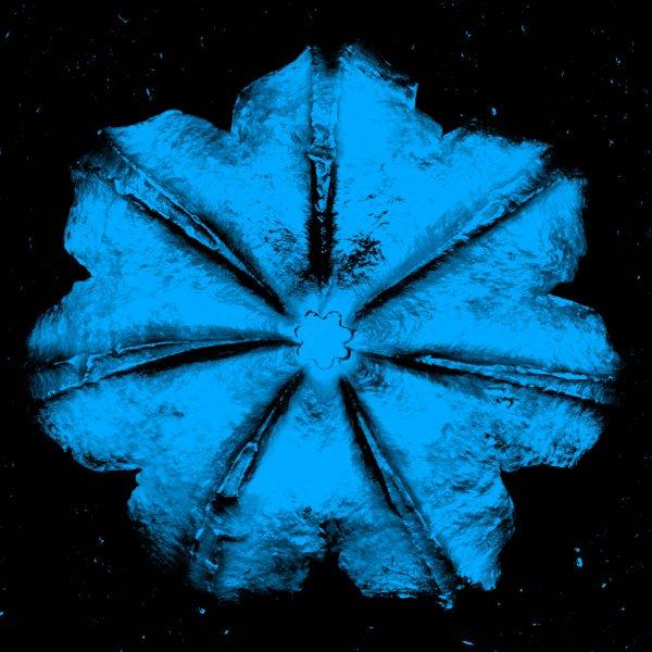 Power Flower N-4 (turquoise On Black) by Rubem Robierb