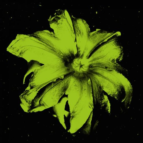 Power Flower N-5 (pistachio On Black) by Rubem Robierb at