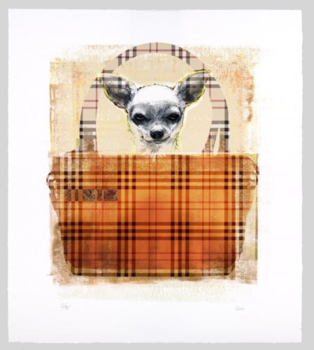 Burberry Dog by Shannan Gia
