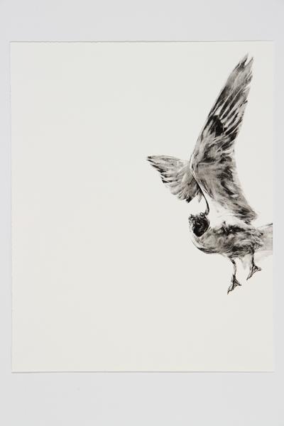 Halfway by Steve Johnson