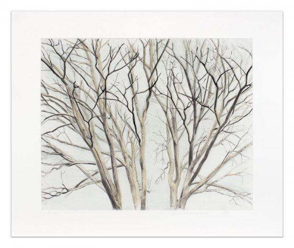 Winter Pin Oak by Sylvia Plimack Mangold