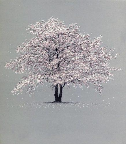 Cherry Blossom by Tokuro Sakamoto at