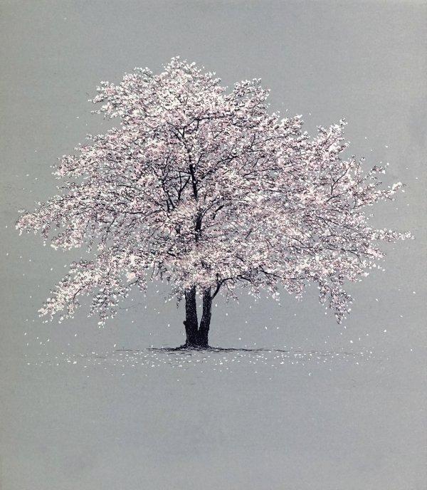 Cherry Blossom by Tokuro Sakamoto