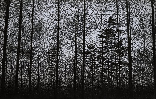 Forest (purple) by Tokuro Sakamoto at