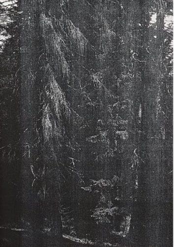 Wald (briol Iii) by Wolfgang Tillmans at