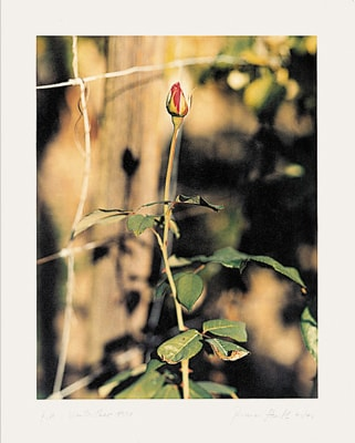 Rose, Winterthur, 1991 by Thomas Struth at