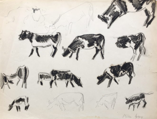 Study Of Cows by Milton Avery