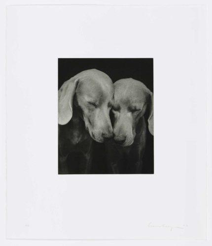 Reflectional by William Wegman