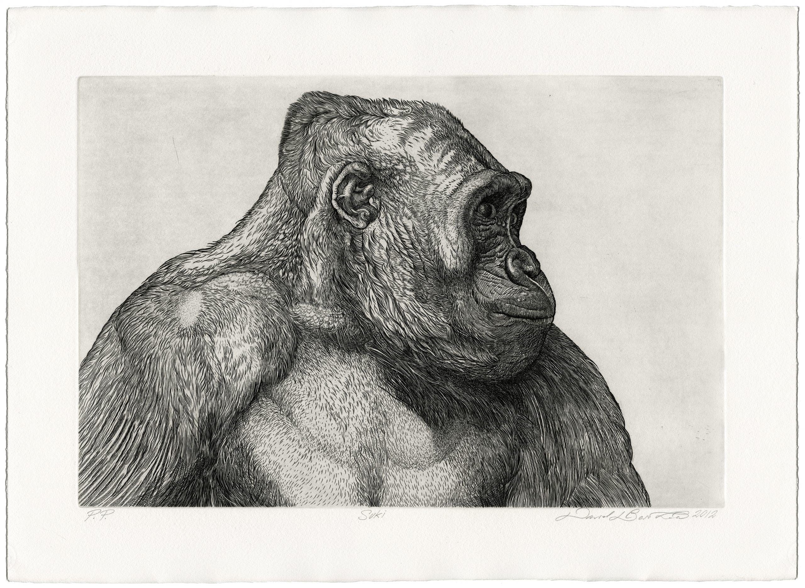 Suki by David Barthold