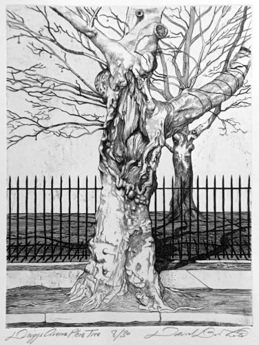 Driggs Ave Plane Tree by David Barthold