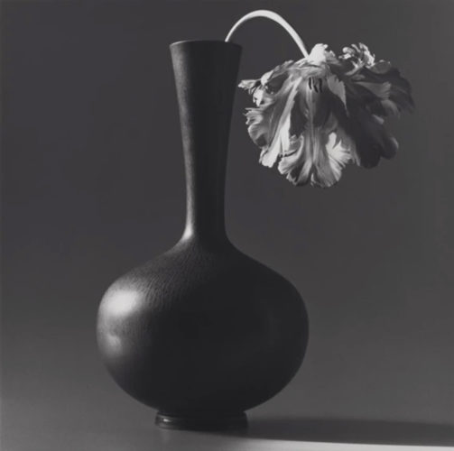 Tulip by Robert Mapplethorpe at