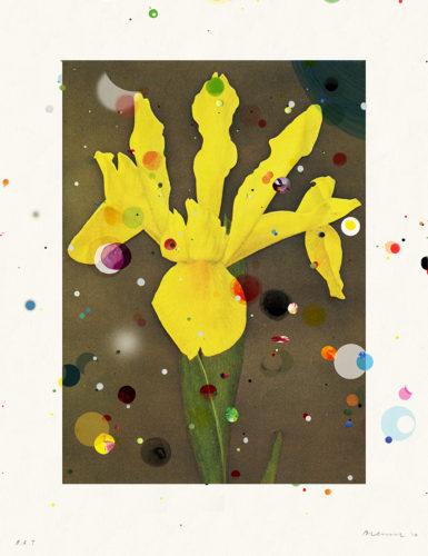 Bloemen: Hollandse Iris Prinses Beatrix by Sebastiaan Bremer at