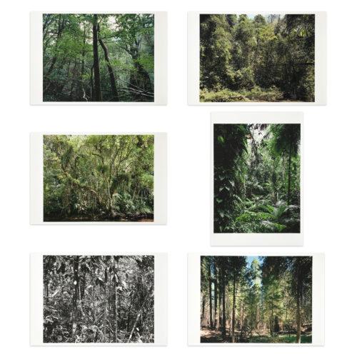 Paradies by Thomas Struth