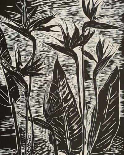 Strelitzia by Elizabeth Blackadder