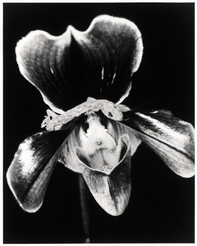 Flower by Nobuyoshi Araki at