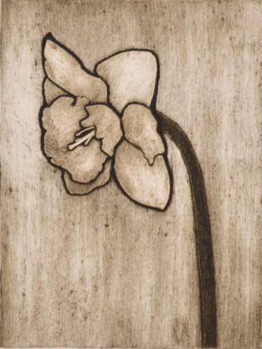 Daffodil 1 by Sari Davidson