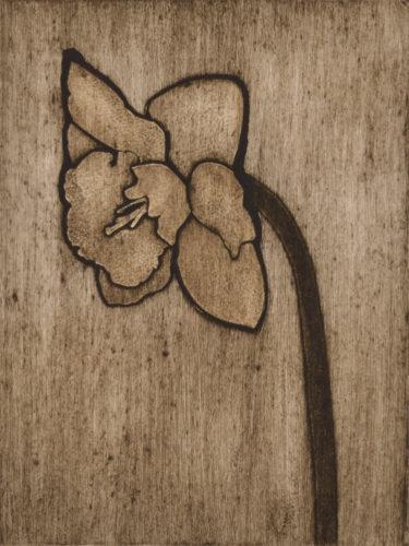 Daffodil 2 by Sari Davidson